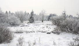 zima krajobrazowa Obrazy Stock
