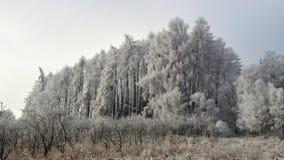 Zima krajobrazy Fotografia Stock