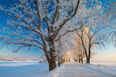 Zima krajobrazy, droga, śnieżyści drzewa Bardzo piękny czas nn Zdjęcie Royalty Free
