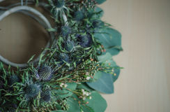 Zima kwiatu wianek na nieociosanym wystroju eukaliptusa eringium Obrazy Royalty Free