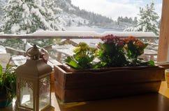 Zima kwiaty Tatransky narodny park vysoke tatry Sistani obraz royalty free