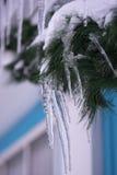 Zima lód na jedlinowym drzewie Zdjęcia Stock