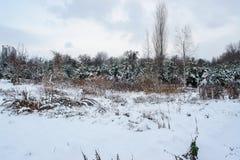 Zima landscape9 Fotografia Stock