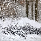 Zima las. Obrazy Royalty Free