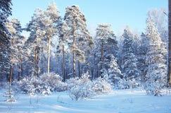 Zima las Zdjęcia Stock