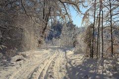Zima las Obrazy Royalty Free