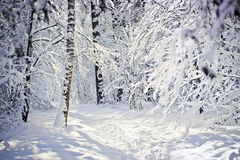 Zima las obraz stock