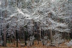 Zima las zdjęcie royalty free