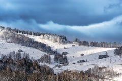 Zima las Zdjęcie Stock