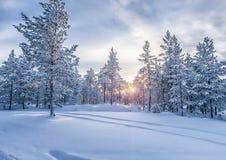 Zima las Zdjęcia Royalty Free