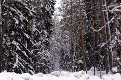 Zima las, drzewa w śniegu Obrazy Royalty Free