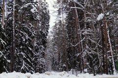 Zima las, drzewa w śniegu Fotografia Stock