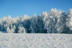 zima las i śnieżysty pole Zdjęcia Stock