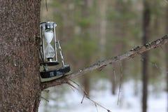 Zima las na jasnym dniu Obrazy Royalty Free