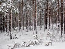 Zima las na zewnątrz Hudiksvall, Swden - obraz stock