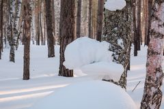 Zima las pod śniegiem Drewno w Syberia w zimie Drewno w Rosja w zimie Zdjęcia Royalty Free