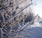 Zima las w śniegu Góry śnieg Mróz i płatek śniegu Lokacji miejsce Karpacki Ukraina, Europa fotografia royalty free