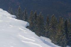 Zima las w śniegu z udziałem jedlina na tle Obraz Stock