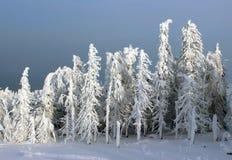 Zima las w świetle słonecznym Obraz Royalty Free