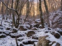 Zima las Obrazy Stock