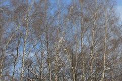 Zima las w jasnej pogodzie zdjęcie stock