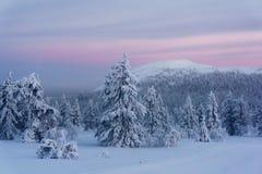 Zima las w północnym Finlandia fotografia royalty free