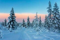 Zima las w północnym Finlandia zdjęcia stock