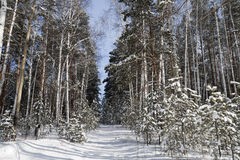 Zima las w Środkowych Urals Obrazy Royalty Free