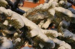 Zima las w Vologda Obraz Royalty Free