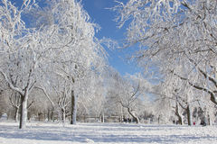 Zima lasu bajka zdjęcie royalty free