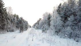 Zima lasu Gładka horyzontalna piędź kamera wzdłuż drogi zdjęcie wideo