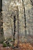 Zima lasu krajobraz Zdjęcia Royalty Free
