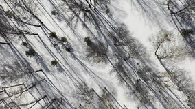 Zima lasu krajobraz i zmierzch, śnieżni zim drzewa, piękna natura, widok z lotu ptaka zbiory