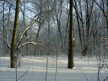 Zima lasu krajobraz w parku, dwa drzewa stoi stronę strona - obok - Zdjęcie Stock