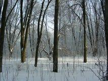 Zima lasu krajobraz w parku, few drzew stojaka strona strona - obok - Fotografia Stock
