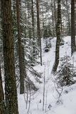 Zima lasu krajobraz zakrywający z białym puszystym śniegiem obraz stock
