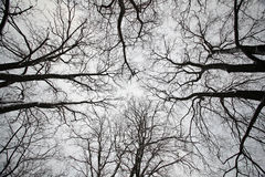 Zima lasu parka czerni gałąź Obraz Stock