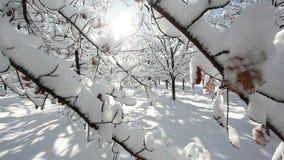 Zima lasu sceneria zbiory