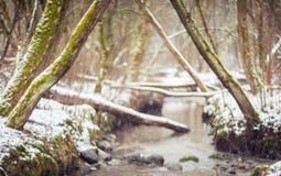 Zima lasu tło Obrazy Royalty Free