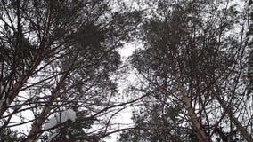 Zima lasu tajga siberia Drzewa zbiory