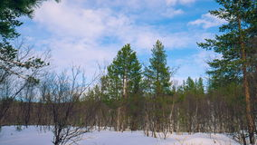 Zima lasu timelapse zbiory wideo