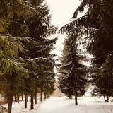 Zima Latvia zdjęcie stock