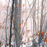 zima leśna zdjęcia stock