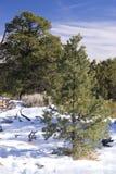 zima leśna Zdjęcia Royalty Free