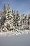 zima leśna Zdjęcie Royalty Free