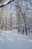 zima leśna obraz stock