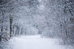 zima leśna Fotografia Royalty Free