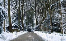 zima leśna Zdjęcie Stock