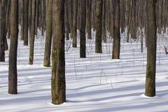 zima leśna Obrazy Royalty Free
