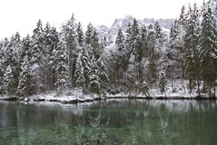 zima leśna Fotografia Stock
